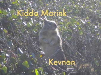 "Kiddo Marink - ""Kevnon"""